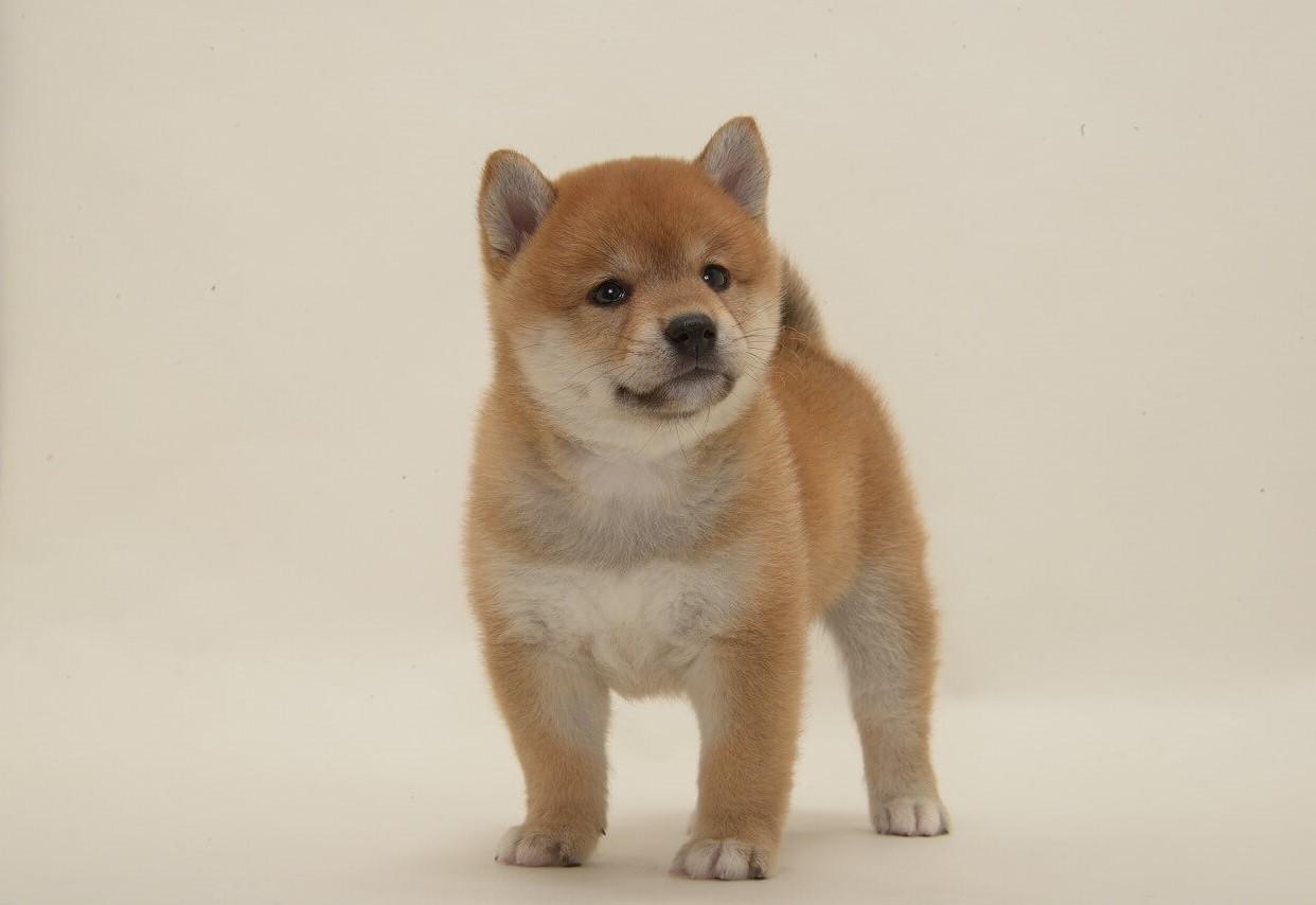 初めて 飼う 犬