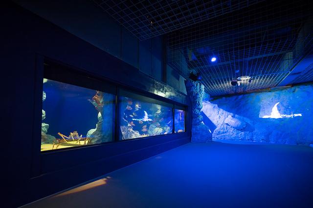 新種&貴重&不思議が満載! 深海魚・深海生物がいる水族館9選