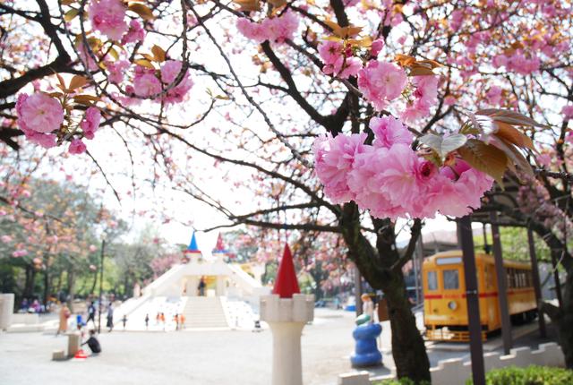 東京都内近郊のお花見&遊具が楽しめる公園12選 穴場&無料も!