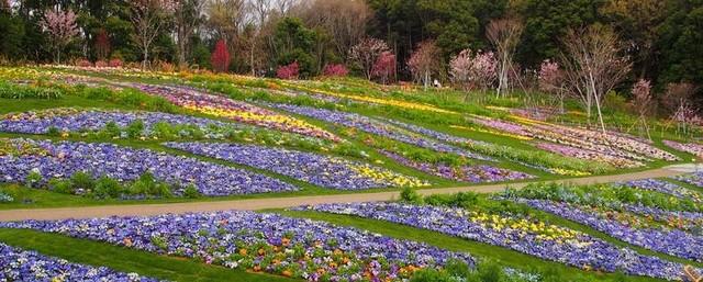 無料の大人気「花畑イベント」開催! ズーラシア隣接で1日満喫