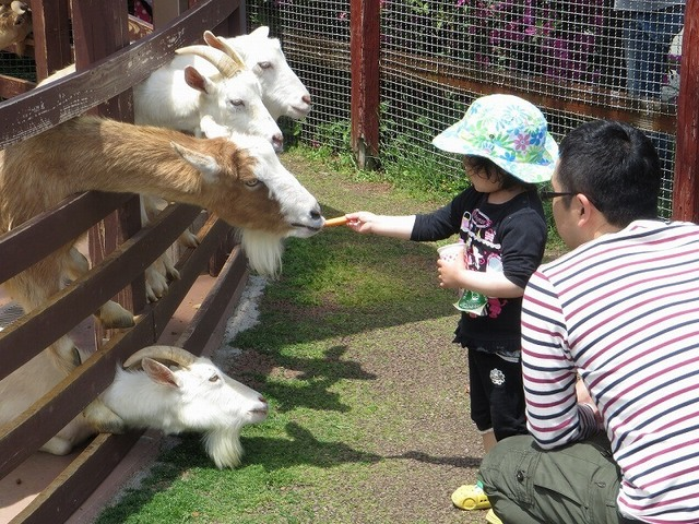 九州&沖縄の1日遊べる無料・格安スポット9選 牧場&遊園地も