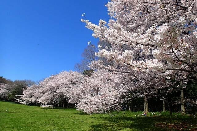 大阪のお花見&遊具が楽しめる公園11選 1日遊べるスポット多数