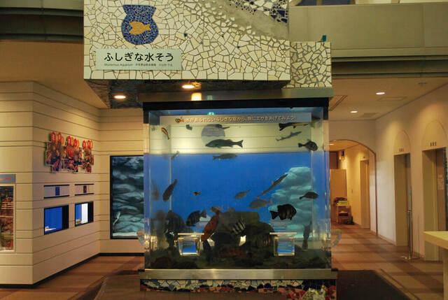 【全国】入館無料のおすすめ水族館11選 タッチプールも充実!
