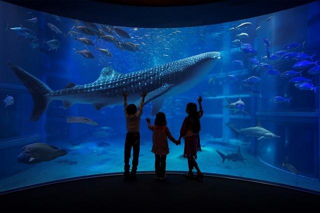 【全国】ジンンベエザメに会える水族館4選 おすすめ展示も紹介