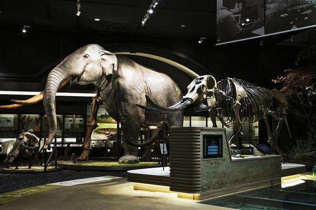 大規模リニューアル「琵琶湖博物館」全紹介 巨大ゾウ展示は圧巻