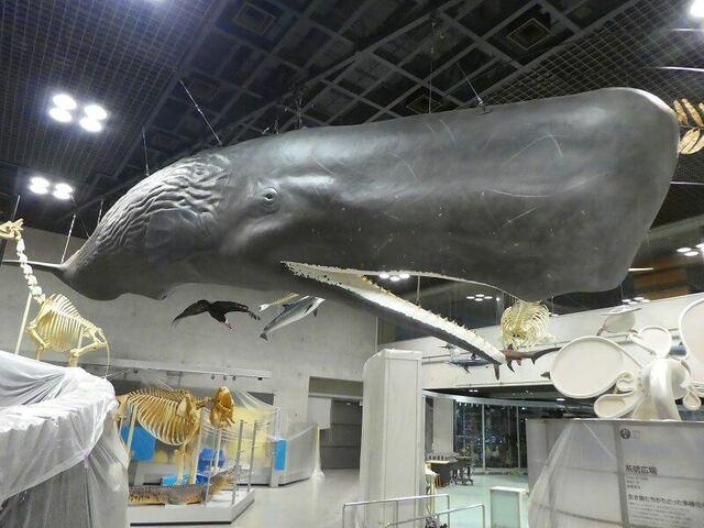 巨大クジラの内部が丸見え! 国立科学博物館に世界初の標本展示