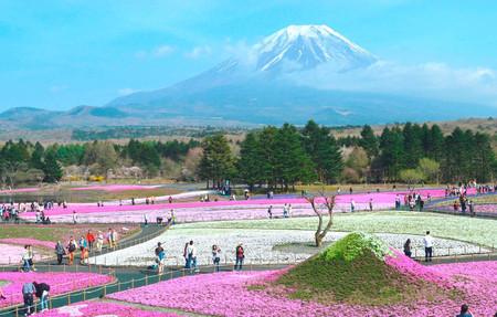 日本一の春に会いに行こう!「富士芝桜まつり」の見どころ