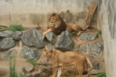ね 動物園 かみ