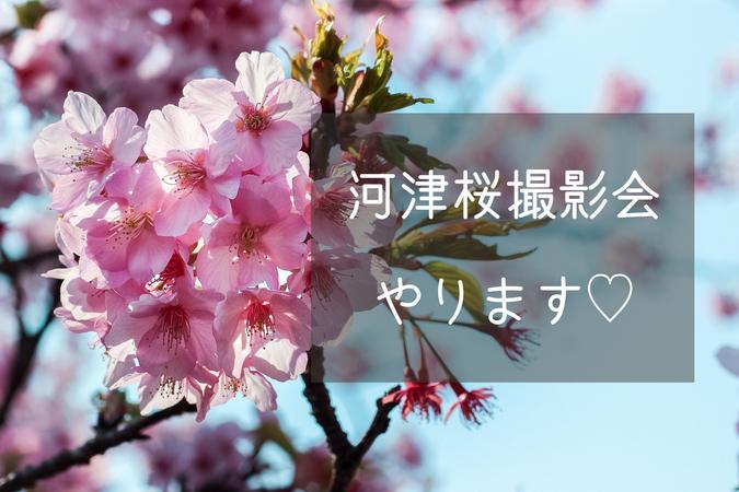 江戸川 区 河津 桜