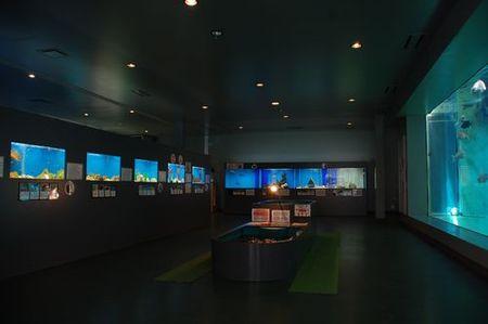 福山大学マリンバイオセンター水族館