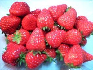 Mama's Berry(ママズ ベリー)
