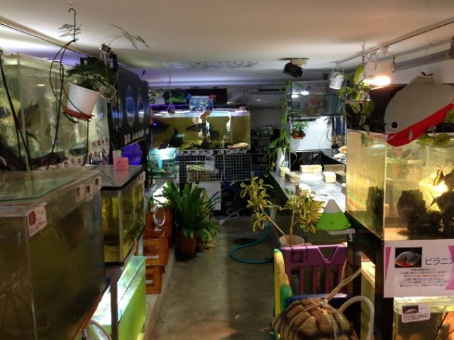 世界の淡水魚水族館:花園教会水族館