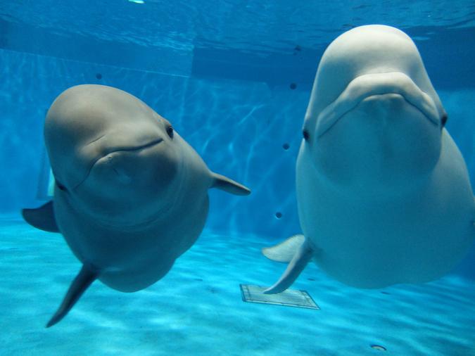 島根県立しまね海洋館アクアス