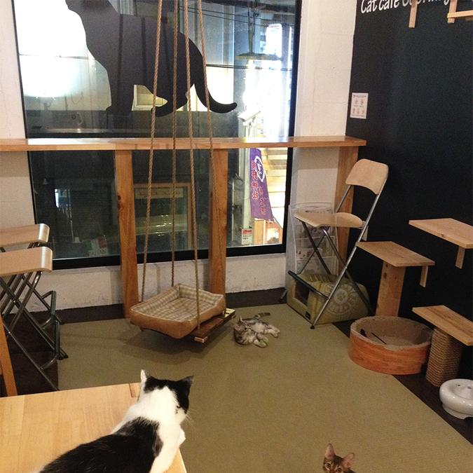 猫カフェ 名古屋 安い