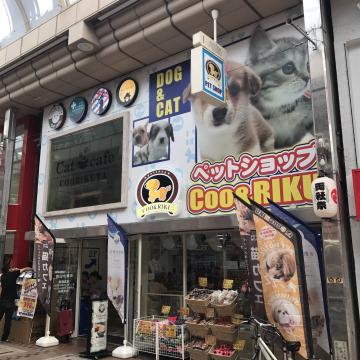 猫カフェ 猫喫茶 空陸家 武蔵小山店