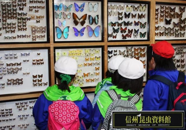 信州昆虫資料館