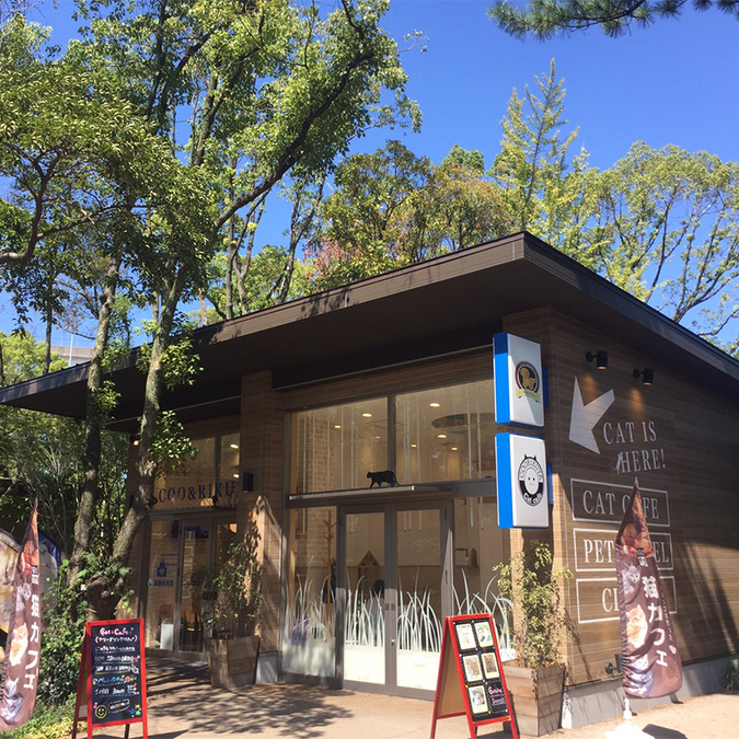猫カフェ 猫喫茶 空陸家 メイカーズピア名古屋店