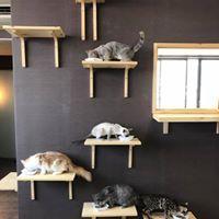 猫カフェ 猫喫茶 空陸家 松本店