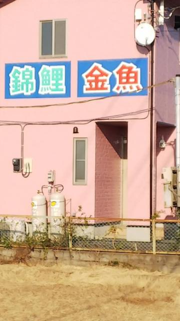 川島釣り堀