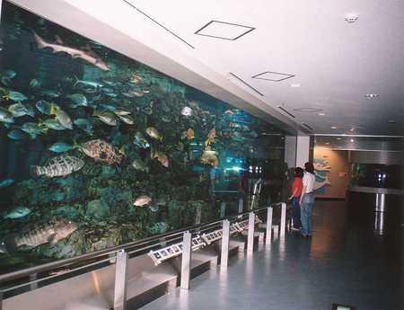 関西電力宮津エネルギー研究所 丹後魚っ知館