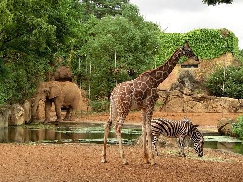 仙台市八木山動物公園