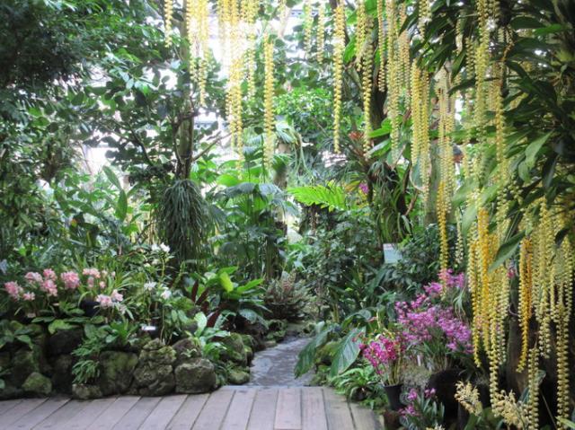 咲くやこの花館 世界の花と緑に出会える大温室