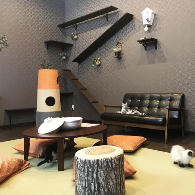 猫カフェ 猫喫茶 空陸家 新四日市店