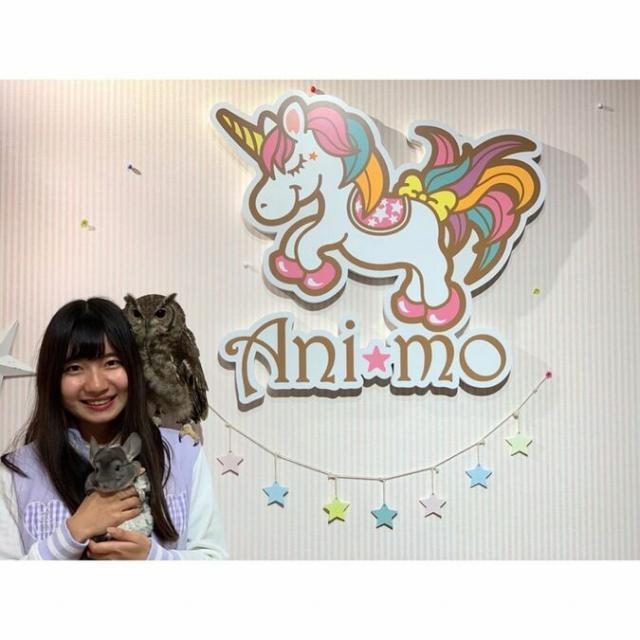 アニモ(Animo)ゆめかわアニマルパーク(6月1日営業再開)