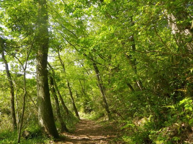堺自然ふれあいの森