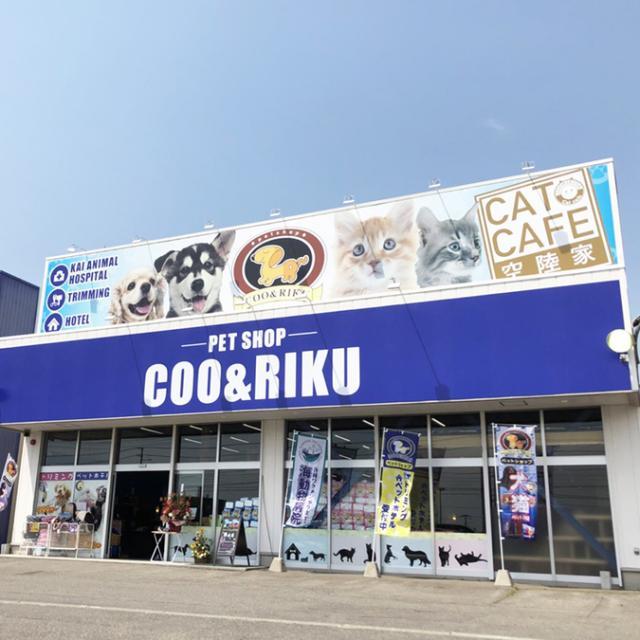 猫カフェ 猫喫茶 空陸家 帯広店