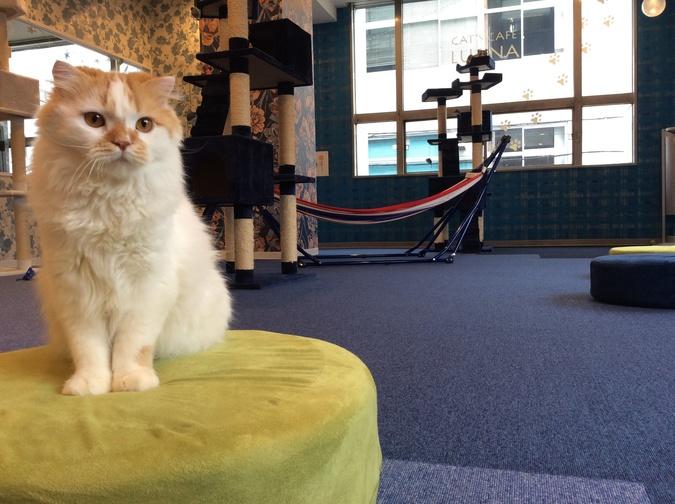 キャットランド 猫カフェ ルアナ