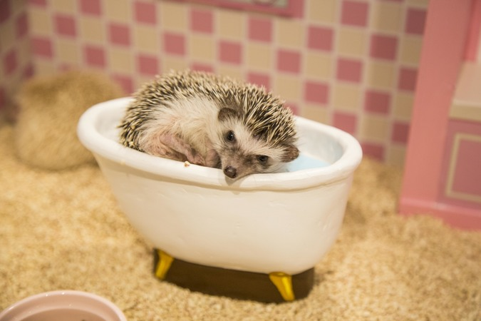 ちくちくCAFE (Hedgehog home and cafe)