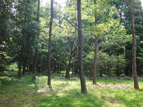 森林・林業研究センター