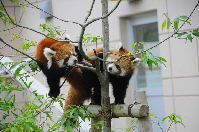 福知山市動物園