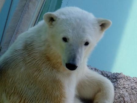 とくしま動物園 北島建設の森