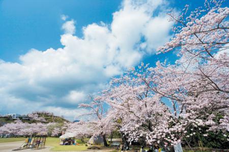 丸岡公園(霧島市)