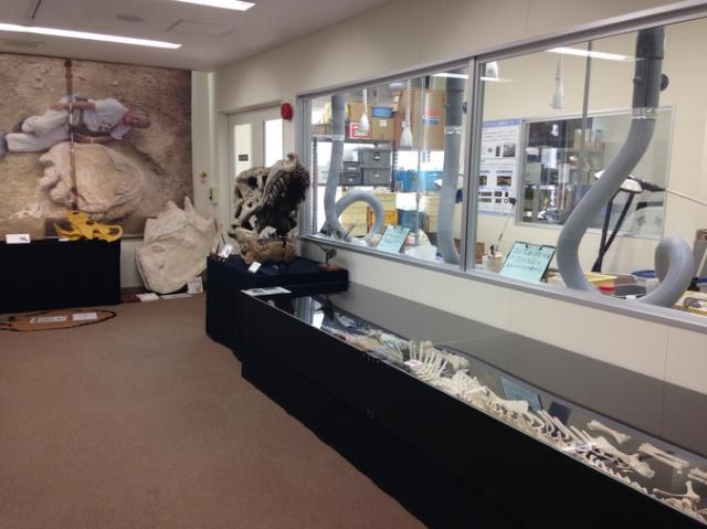 恐竜学博物館