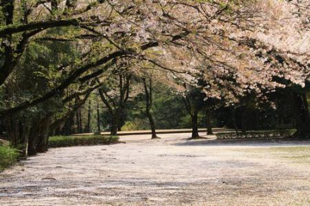 綾瀬市 城山公園