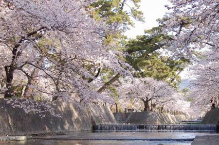 夙川公園(夙川河川敷緑地)