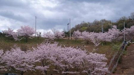 白木山公園(河南町)