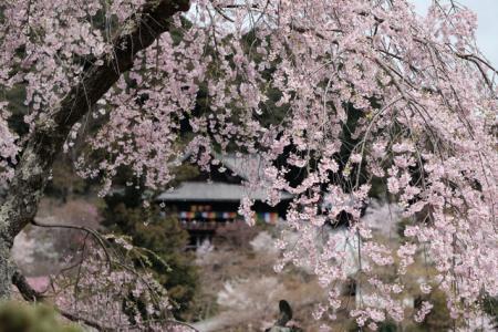 長谷寺(桜井市)