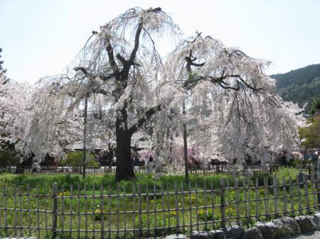 嵐山公園(京都市)