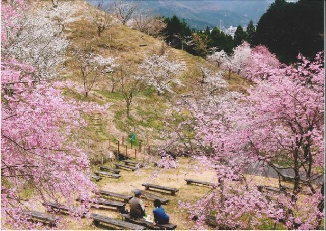 かみかわ 桜の山・桜華園