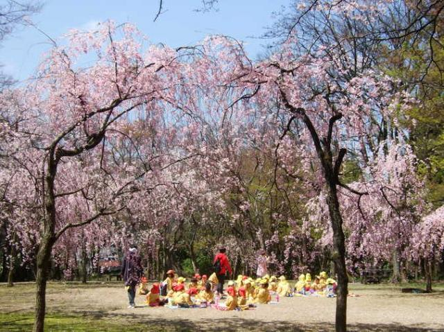 大堰宮公園
