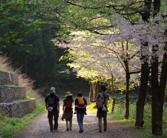 大峰山橡平サクラ樹林(大峰山桜公園)