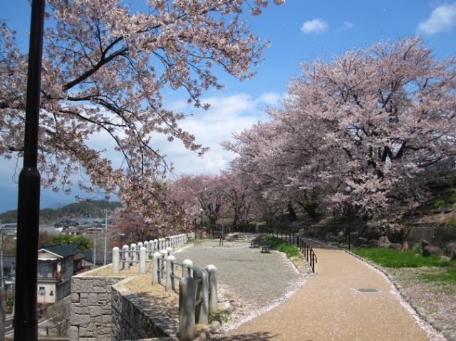 甚六桜公園(甚六桜)