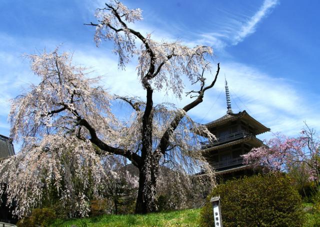 西栄山浄専寺