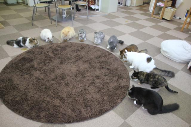 Cat Cafe ねころび(キャットカフェ ねころび)