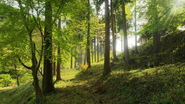 水源の森キャンプ・ランド(旧道志水源の森)