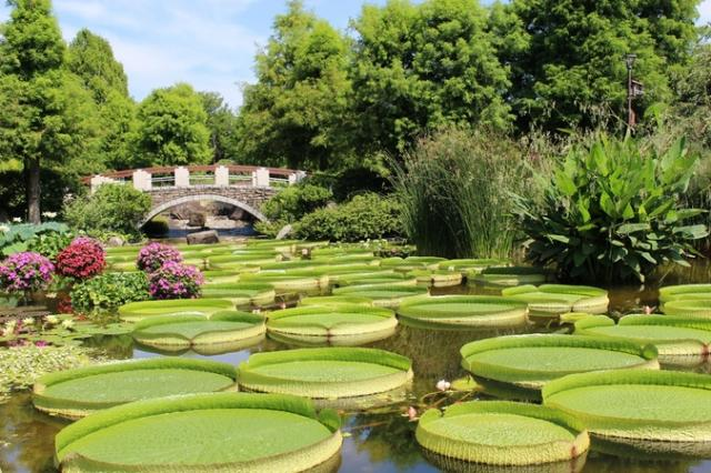 草津市立水生植物公園みずの森